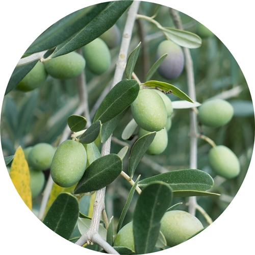 olive-972933_1280.jpg